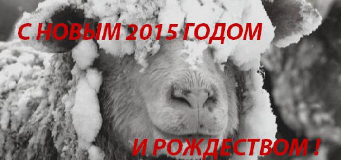 овца20151